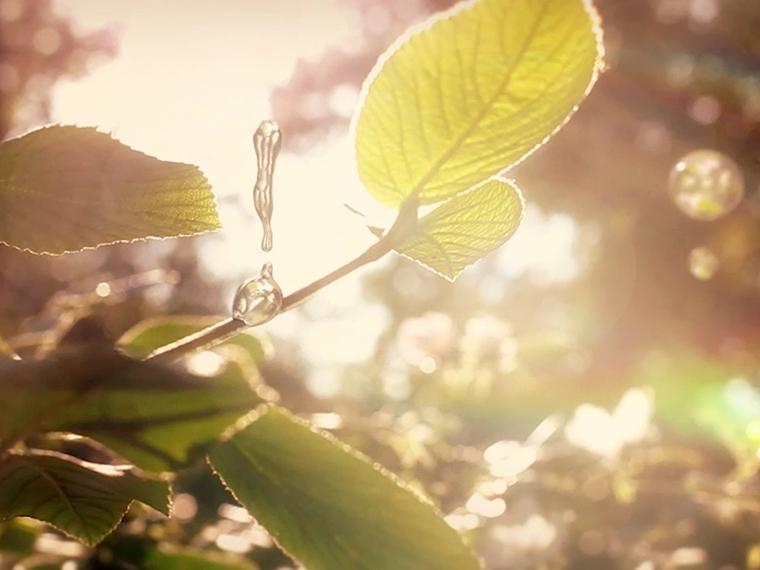 nature thumb
